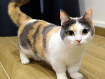 videozapisi s dugim mačkama