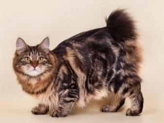 nejlepší těsná kočička