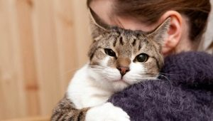 How to make a cat affectionate?