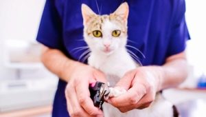 Choosing scissors for clipping claws in cats