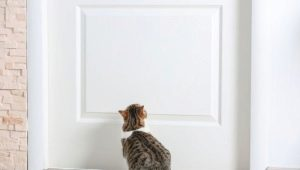 What to do so that the cats do not mark the front door?