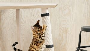 How to wean the cat to tear wallpaper?