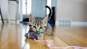 How to make a toy for a cat with your own hands?