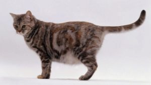 Food for pregnant and lactating cats: options and choices