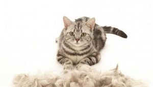 Cat sheds heavily: causes and solutions