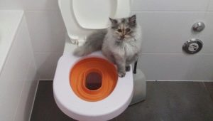 Pads on the toilet for cats