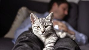 Why do cats sleep at the feet of the owner?