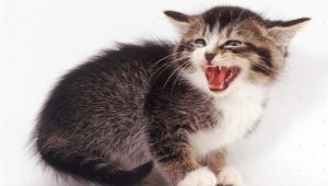 Why does a cat hiss and what does the owner do?