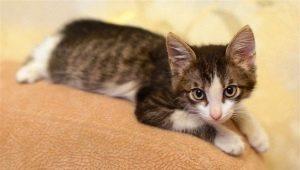 Development and maintenance of a kitten in 3 months