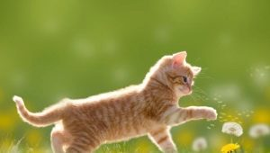 Red cats: how do they behave and what are they like?