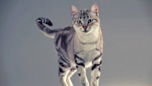 The cutest breeds of cats