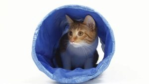 Tunnels (tunnels) for cats: types and selection criteria