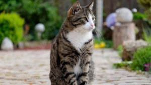 Choose a nickname for a tabby cat
