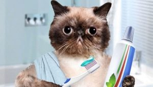 Toothpaste for cats: types, choices and tips for using