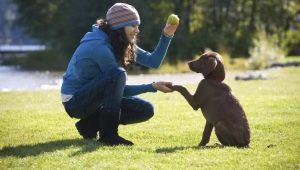 Training puppies and adult dogs: features and basic commands