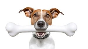 How and what to feed the Jack Russell Terrier?