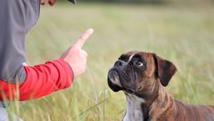 Is it possible to punish a dog and how to do it correctly?
