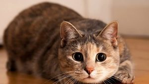 Psychology of cats: useful information about behavior