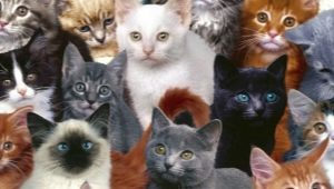 A variety of cat breeds