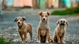 How many mongrels live on the street and at home?
