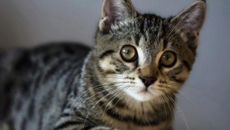 Tzv. flock je kočka téměř nahá, s řídkou srstí na bříšku, srst má na tlapkách a hlavě, někdy.
