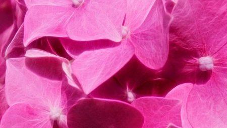 كيفية الحصول على اللون الوردي