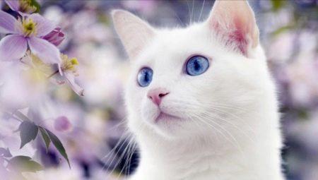 Tamno ružičasta maca