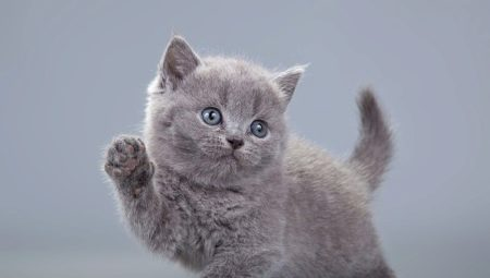 Bagaimana Cara Memanggil Anak Kucing Kelabu 16 Gambar Popular Nama Asli Dan Umum Untuk Kucing Dan Kucing Kelabu