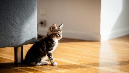Unduh 93+  Gambar Kucing Tua Lucu Gratis