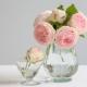 Mitä minun pitäisi tehdä varmistaakseni, että ruusut seisovat maljassa pitkään?