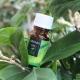 Tea tree olie voor het gezicht: de voordelen, schade en subtiliteiten van gebruik