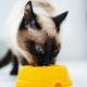 What to feed Siamese cats?