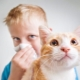 Hypoallergenic cats and cats: breeds, especially the choice and content