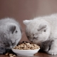 Hypoallergenic cat food and kittens: features, types and subtleties of choice