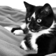 Names for cats and cats black and white color