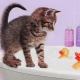 How to bathe the kitten for the first time and at what age can you start?