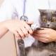How to cut the claws of a cat and a cat with a claw cutter?