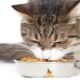 How to teach a cat to dry food?