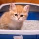 كيفية تعليم القط في الدرج؟