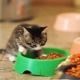 How to choose food for kittens under the age of one year?