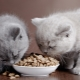 How to choose a premium dry food for cats?