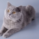 Cartesian cats: breed features, nature and rules of care