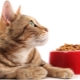 Cats for cats: the differences and nuances of choice