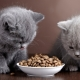 Foods for kittens and cats with sensitive digestion