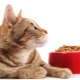 Holistic-class cat food: manufacturers rating and selection rules