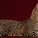 Usher's cat: features and rules of content