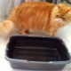 Trays with high sides for cats