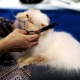 Clippers for cats haircut: types, models, selection and operation