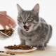 Is it possible to feed the cat only dry food and how to do it?