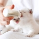 Is it possible to feed the kitten baby food?